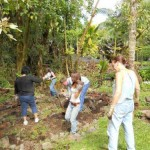 Busy volunteers in Agro-forest.