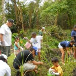 Kiwanis volunteers pull weeds in the Agro-forest.